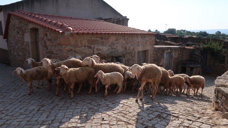 Aldeia do Juízo - Pinhel - Guarda - Portugal © Viaje Comigo