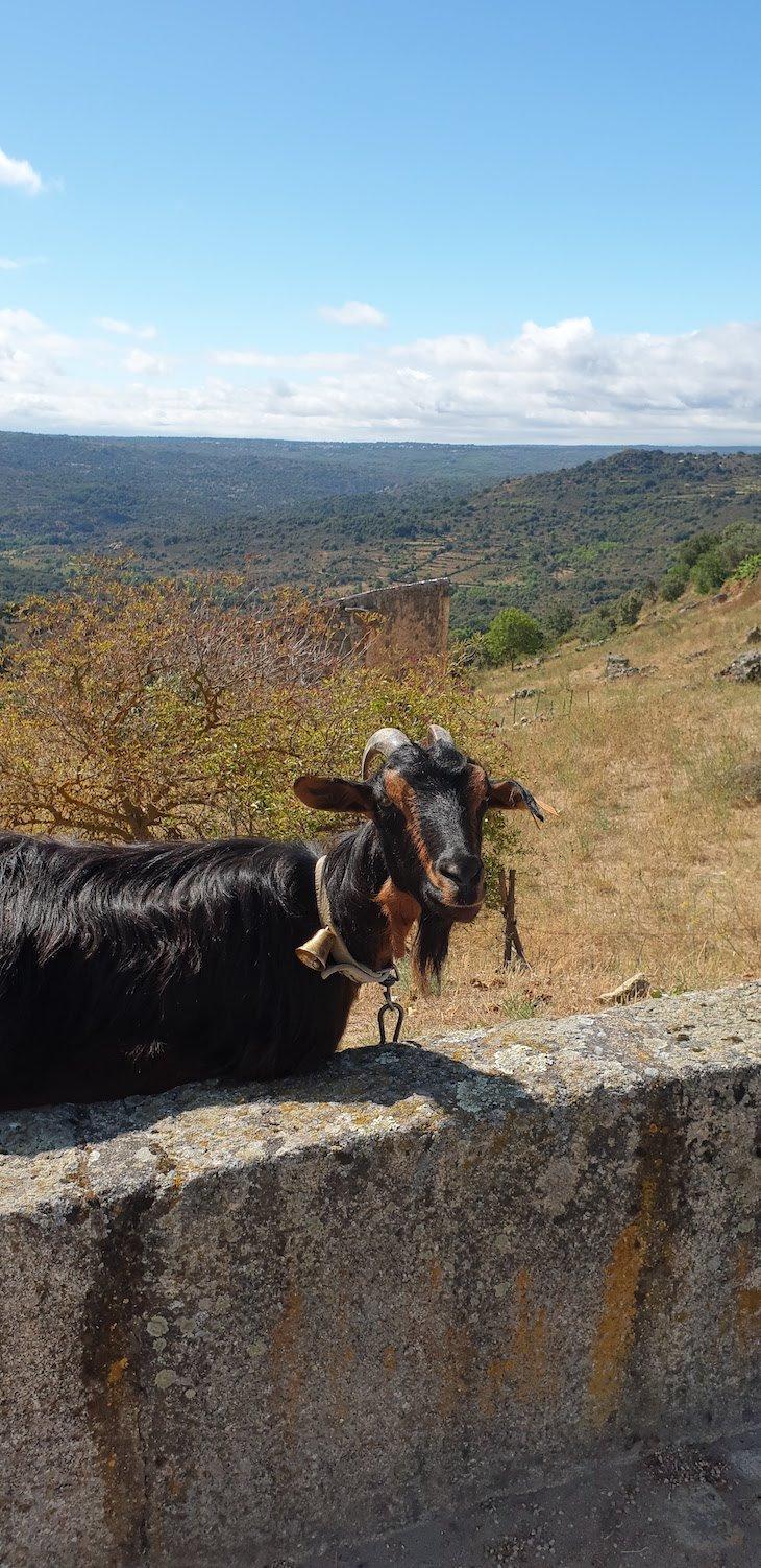 Ciclo 12 em Rede em Castelo Mendo - Aldeias Históricas de Portugal © Viaje Comigo