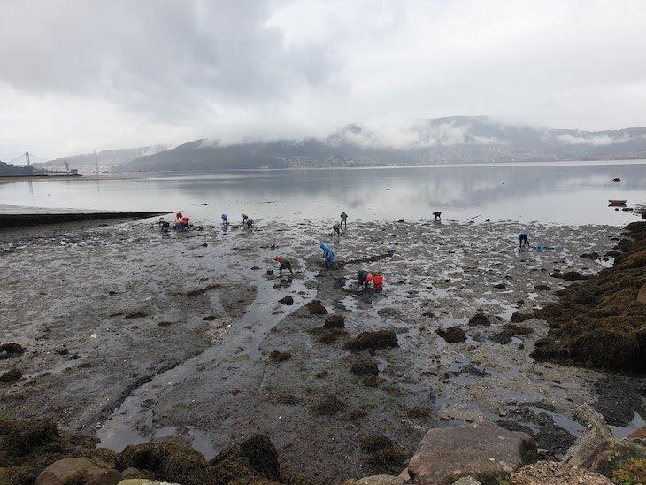 Na Ria de Vigo, Turismo Marinero - Amarturmar - Redondela - Galiza © Viaje Comigo