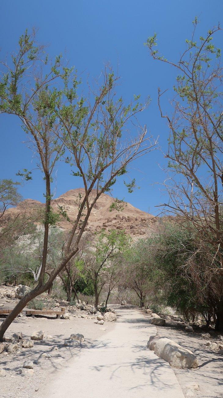 Reserva Natural de Ein Gedi - Israel © Viaje Comigo