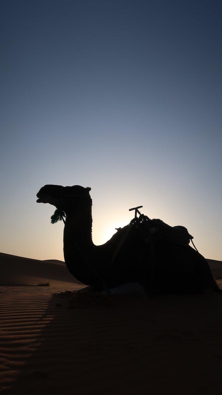 Dromedário nas dunas de Erg Chebbi, Merzouga - Deserto Saara, Marrocos © Viaje Comigo