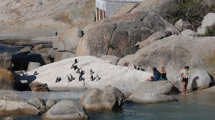 Pinguins junto do Tintswalo at Boulders Boutique Villa - África do Sul © Viaje Comigo