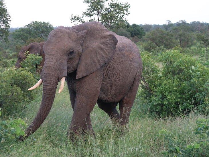 Tintswalo Safari Lodge - África do Sul © Viaje ComigoTintswalo Safari Lodge - África do Sul © Viaje Comigo