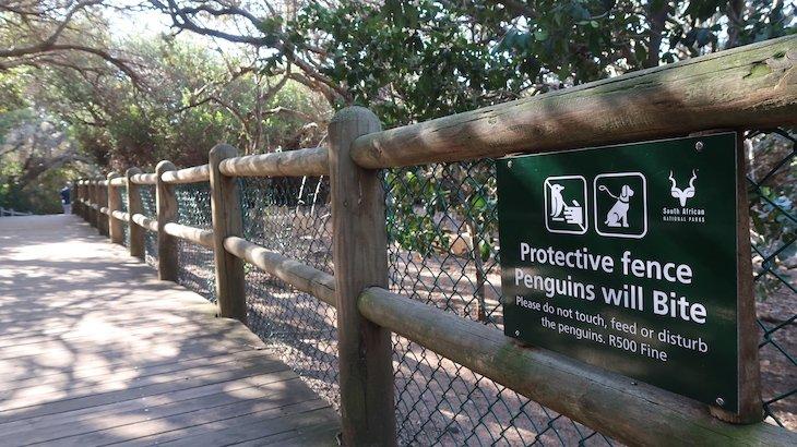 Cuidado: Pinguins podem morder, se se sentirem em perigo! Boulders Beach - África do Sul © Viaje Comigo