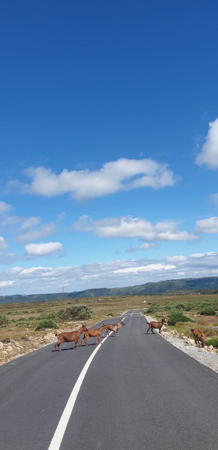 Estrada para Nossa Sehora do Minheu - Vila Pouca de Aguiar© Viaje Comigo