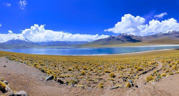 Laguna Miscanti - Tour Lagunas Altiplânicas e Piedras Rojas - Atacama - Chile © Viaje Comigo