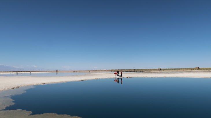 Tour Laguna Cejar - Atacama - Chile © Viaje Comigo
