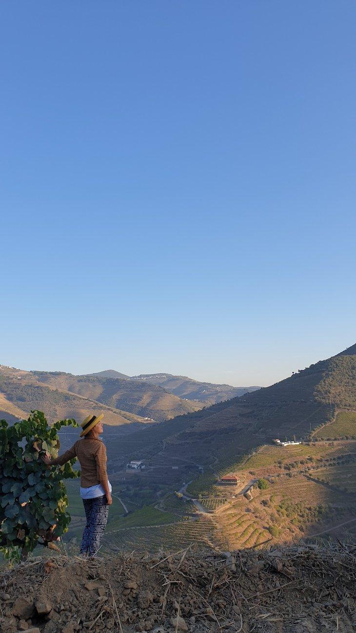 Vindimas 2020 na Quinta da Côrte - Valença do Douro © Viaje Comigo