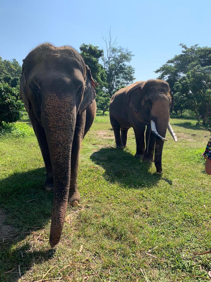 Santuário de elefantes - Chiang Mai - Tailândia © Viaje Comigo