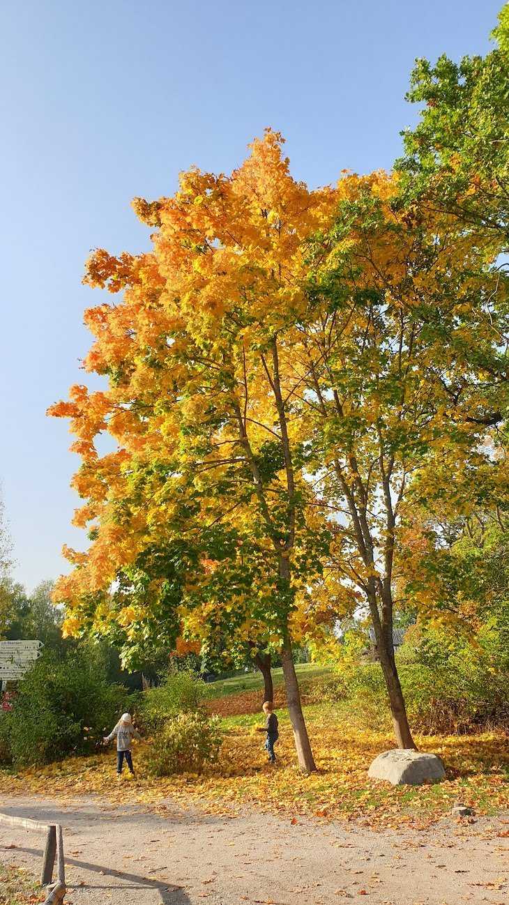 Outono em Skansen - Estocolmo - Suécia © Viaje Comigo