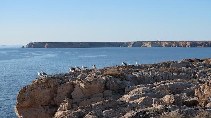 Cabo São Vicente - vista da Fortaleza de Sagres - Algarve - Portugal © Viaje Comigo