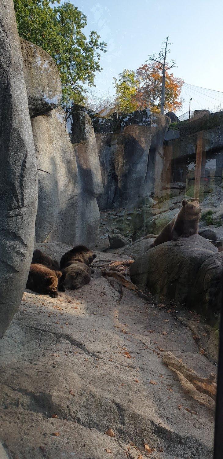Ursos em Skansen - Estocolmo - Suécia © Viaje Comigo