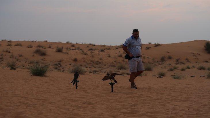 Espetáculo com falcões - Dubai Desert Conservation Reserve - Dubai - Emirados Árabes Unidos © Viaje Comigo