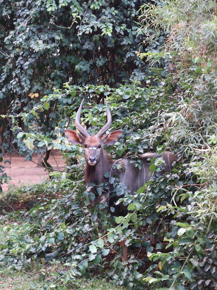 Mlilwane Wildlife Sanctuary - Suazilândia © Viaje Comigo