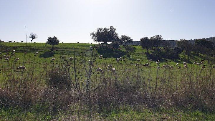 O lado rural de Loulé - Algarve - Portugal © Viaje Comigo