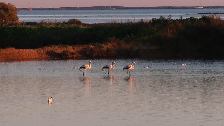 Flamingos nas salinas - Olhão - Algarve © Viaje Comigo