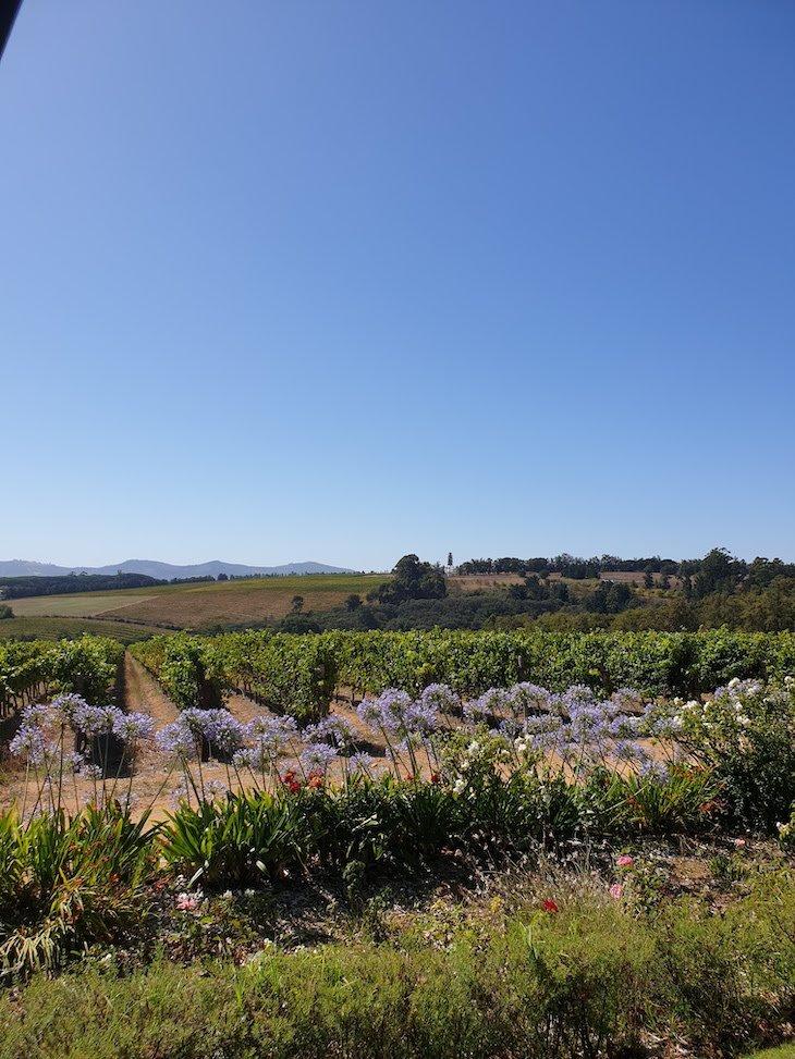 Vinícola Alto - Stellenbosch - África do Sul © Viaje Comigo