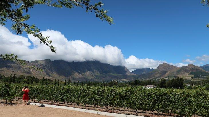 Vinhas no Le Lude, Franschhoek - África do Sul © Viaje Comigo