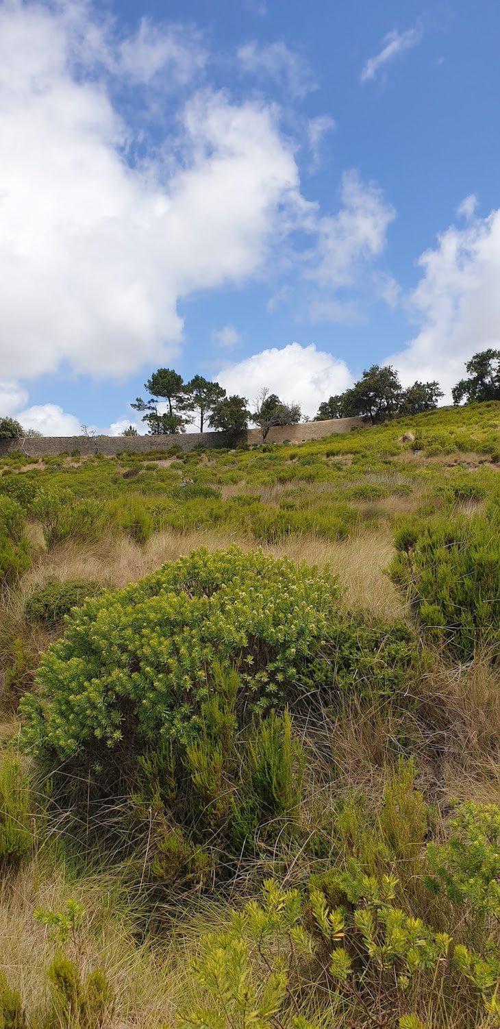 Muro da Tapada Nacional de Mafra - Portugal © Viaje Comigo